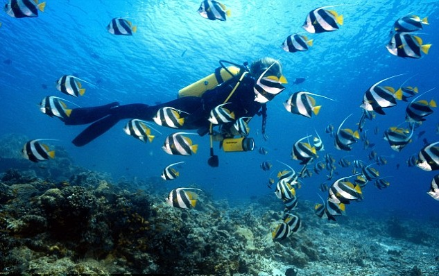 scuba-diving-maldives